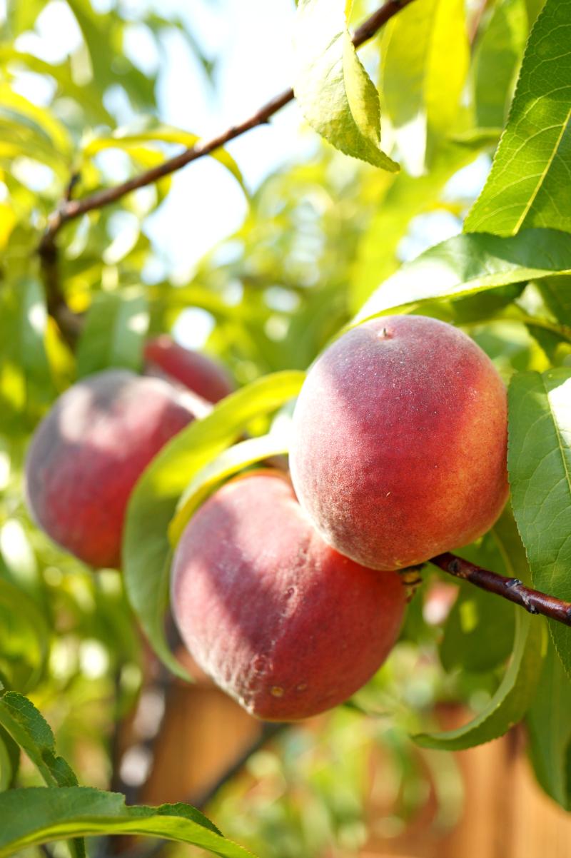 peach blueberry buckle | The Baking Fairy